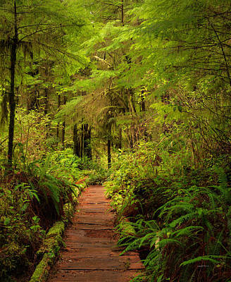 Quinualt Rain Forest Path Poster by Leland D Howard