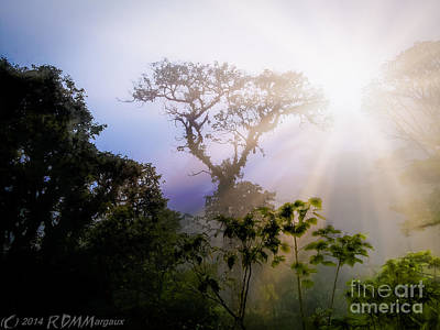 Rain Forest Sun Poster by  rdm-Margaux Dreamations