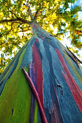 Rainbow Eucalyptus Poster by Mitch Cat