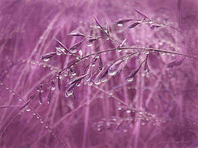 Raindrops Falling On Plum Grasses Poster by Jennie Marie Schell