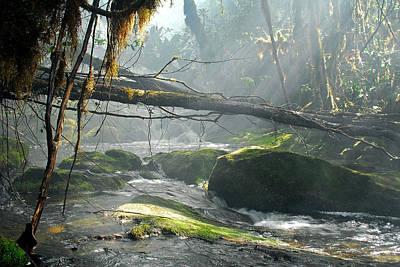 Rainforest Stream Poster by Stefan Carpenter