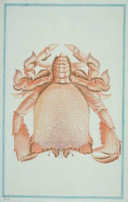 Ranina Ranina Poster by Natural History Museum, London