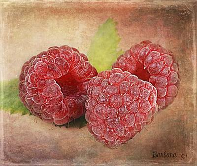 Raspberries  Poster by Barbara Orenya