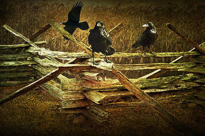 Raven Crows On A Split Rail Fence Poster by Randall Nyhof