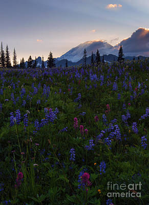 Rays Over Rainier Poster by Mike  Dawson