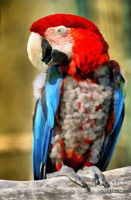 Red And Green Macaw Poster by George Atsametakis