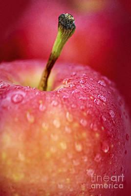 Red Apple Macro Poster by Elena Elisseeva