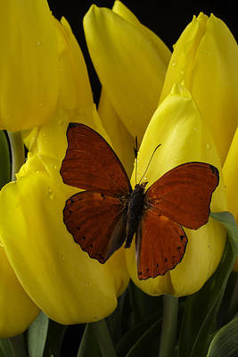 Red Butterfly On Yellow Tulip Poster by Garry Gay