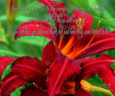 Red Day Lily And Quote Poster by Barbara Griffin