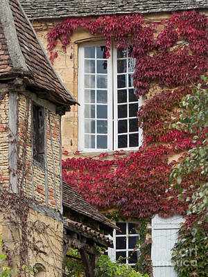 Red Ivy Window Poster by Paul Topp