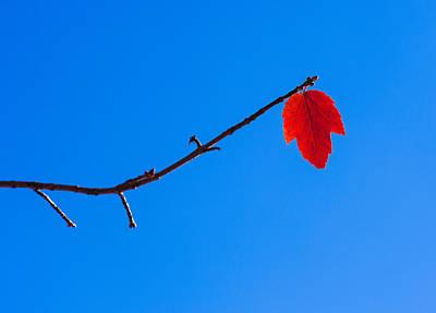 Red Leaf - Arboretum - Madison Poster by Steven Ralser