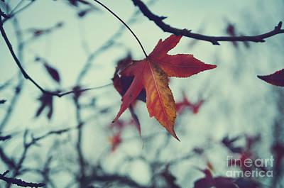 Red Leaf Poster by Jelena Jovanovic