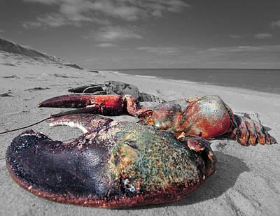 Red Lobster Poster by Dapixara Art