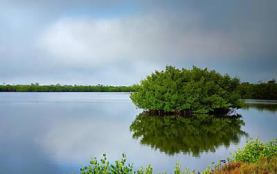 Red Mangrove Marsh I Poster by Steven Ainsworth