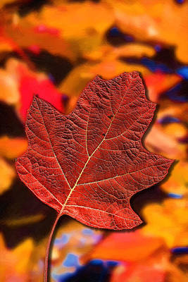 Red Maple Leaf On An Abstract Painting Poster by John Haldane