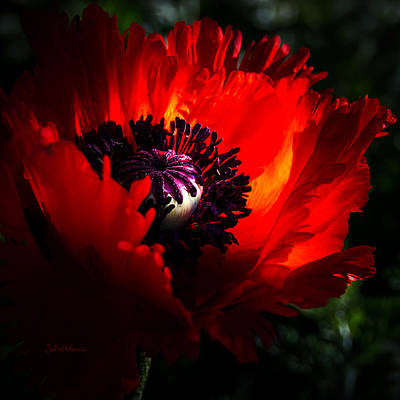 Red Passion Oriental Poppy Poster by Julie Palencia