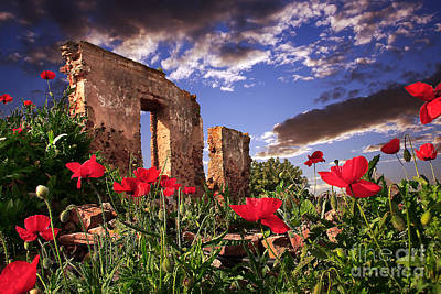 Red Poppy Field Poster by English Landscapes