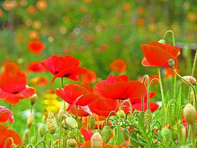 Red Poppy Flowers Meadow Art Prints Poster by Baslee Troutman