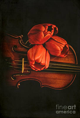 Red Tulips On A Violin Poster by Edward Fielding
