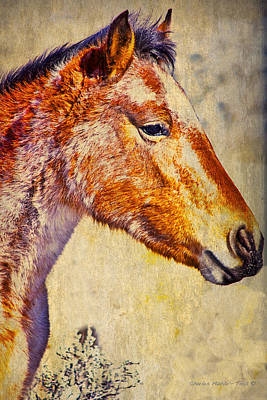 Red Willow Pony  Xxx  Poster by Charles Muhle