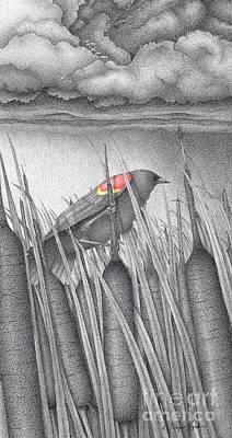 Red-winged Blackbird Poster by Wayne Hardee