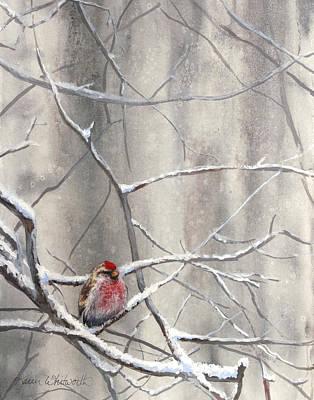 Redpoll Eyeing The Feeder - 1 Poster by Karen Whitworth