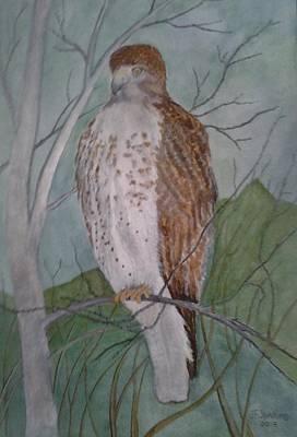 Redtail Hawk Poster by Jack Jenkins