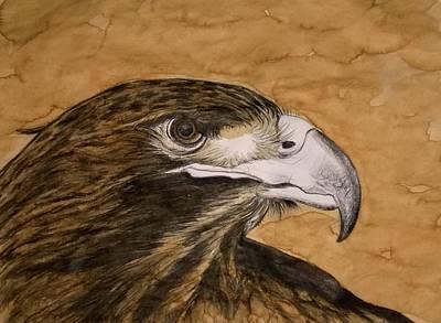 Redtailed Hawk Poster by Justin Boysko