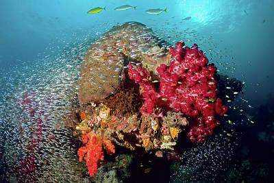 Reef Scenics, Raja Ampat Islands, Irian Poster by Jaynes Gallery
