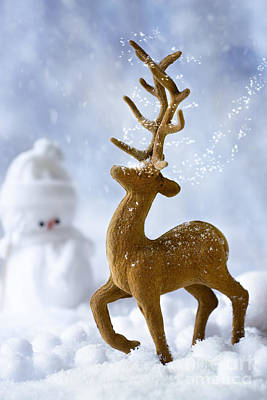 Reindeer In Snow Poster by Amanda And Christopher Elwell