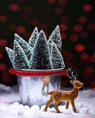 Reindeer With Christmas Trees Poster by Amanda And Christopher Elwell