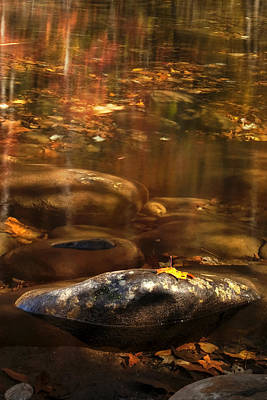 Resting Leaf Poster by Andrew Soundarajan