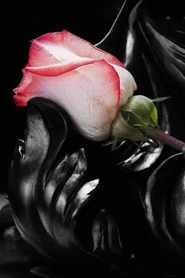 Resting Rose Poster by Tom Mc Nemar