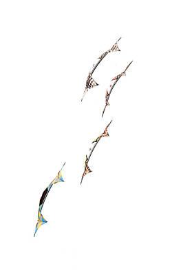 Rev Kites On White 1 Poster by Rob Huntley