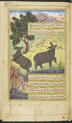 Rhinoceros Poster by British Library