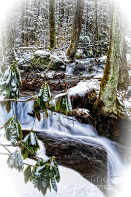 Rhododendron Waterfall Winter Poster by Thomas R Fletcher