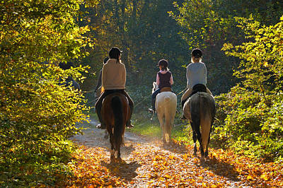 Riders With Horses In The Forest Poster by Matthias Hauser