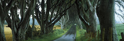 Road At The Dark Hedges, Armoy, County Poster by Panoramic Images