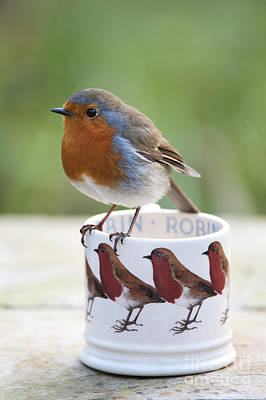 Robin Redbreast Poster by Tim Gainey
