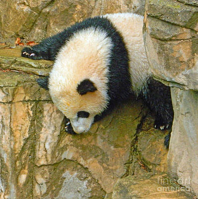 Rock Climbing - Baby Bao Bao To The Rescue Poster by Emmy Marie Vickers