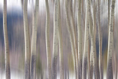 Rocky Mountain Winter Aspen Tree Forest Dream Poster by James BO  Insogna