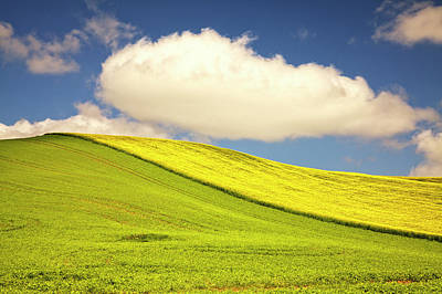 Rolling Hills Of Canola And Pea Fields Poster by Terry Eggers