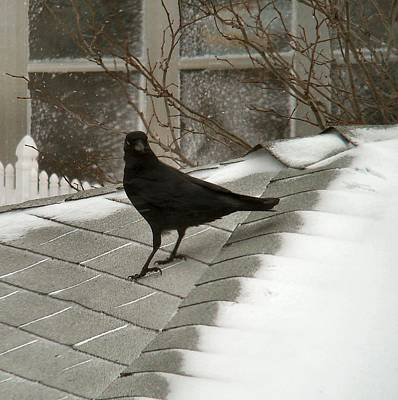 Roof Crow Poster by Gothicolors Donna Snyder