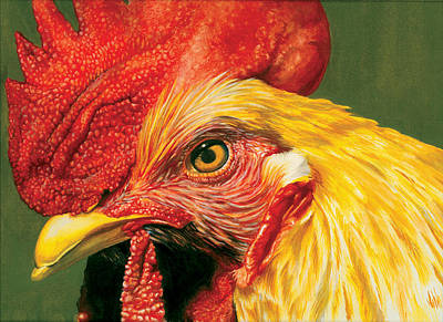 Rooster Poster by Kelly Gilleran