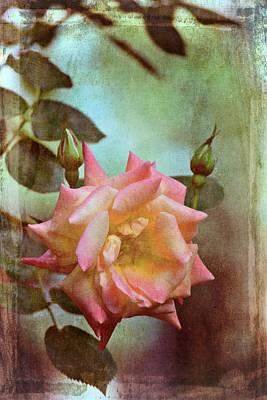 Rose 263 Poster by Pamela Cooper