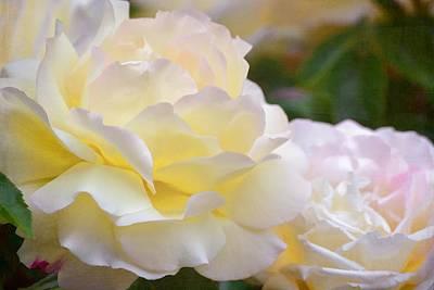 Rose 273 Poster by Pamela Cooper