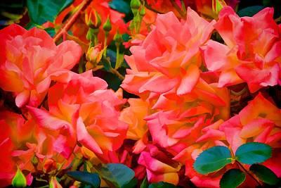 Rose 278 Poster by Pamela Cooper