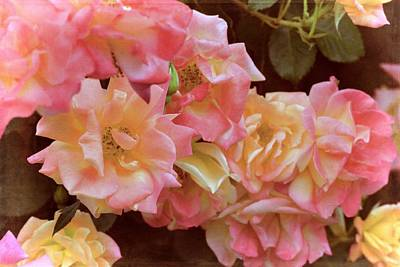 Rose 287 Poster by Pamela Cooper