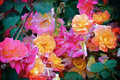 Rose 304 Poster by Pamela Cooper