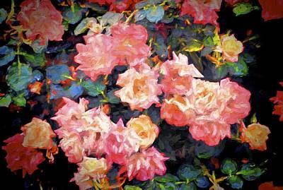 Rose 319 Poster by Pamela Cooper